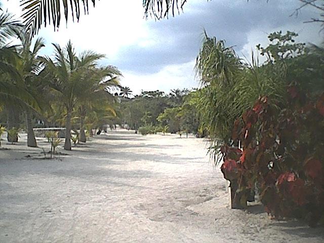 path to beach.jpg