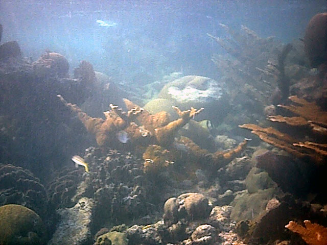 reefcrest.jpg