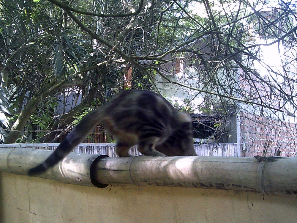 cute cat at Itapoa.jpg