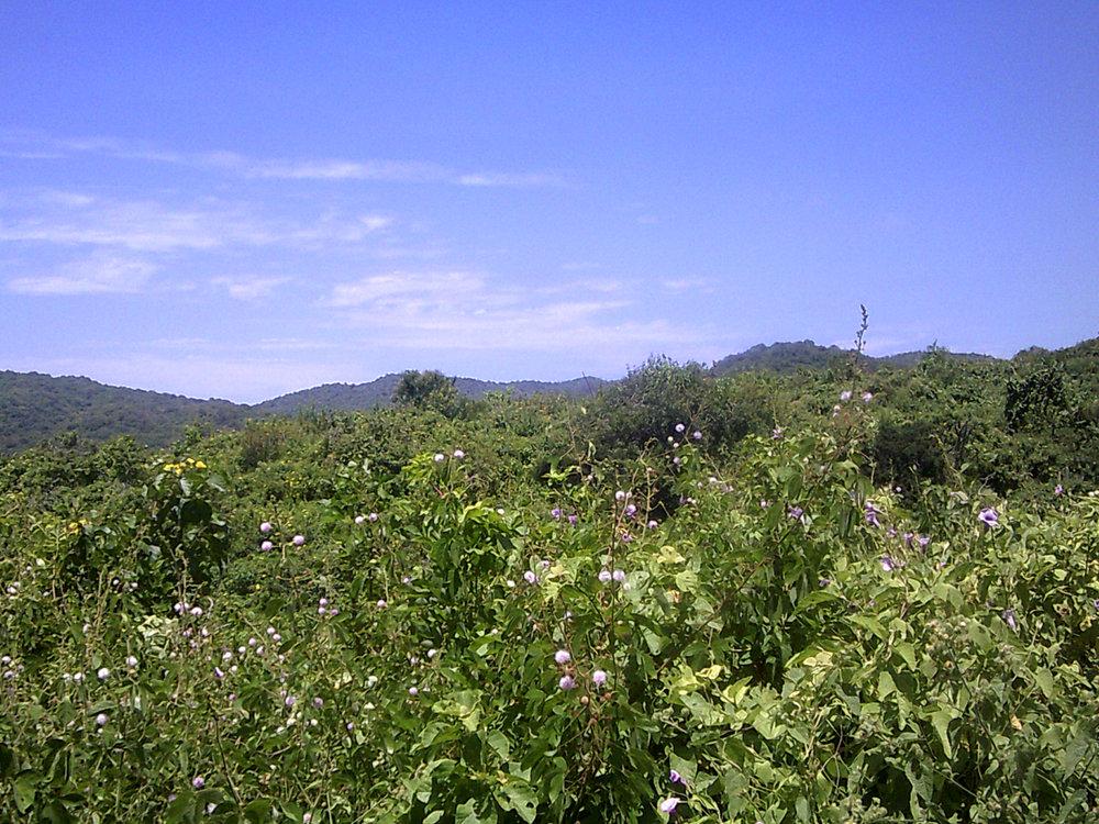 dry coastal forest.jpg