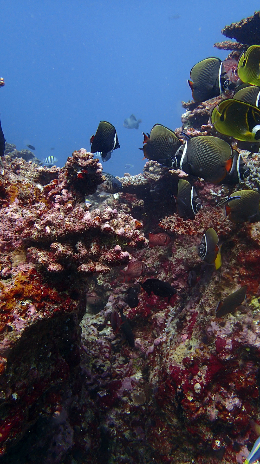 fish on dead reef.jpg