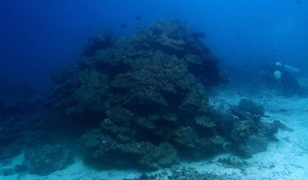 live coral!.jpg