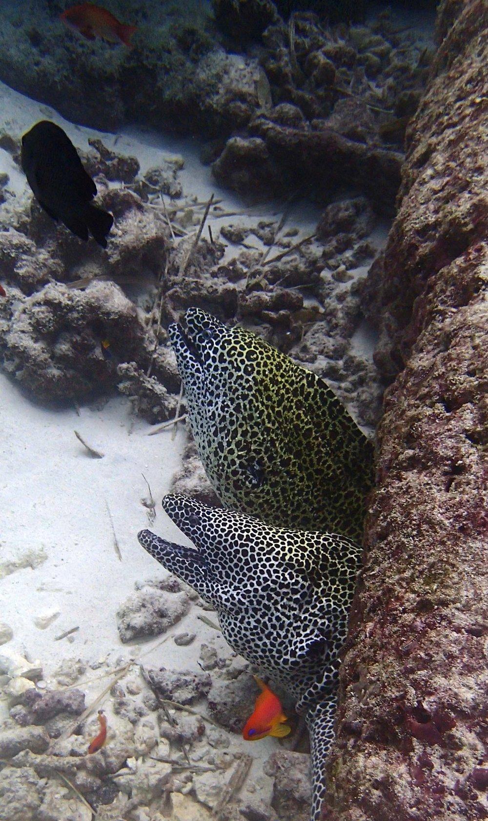 friendly eels.jpg