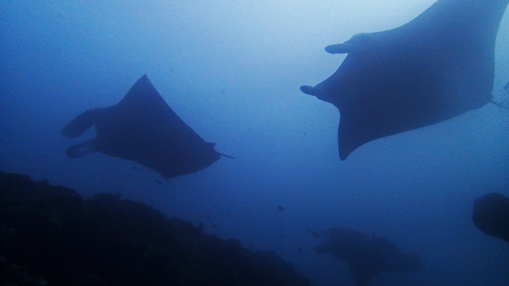manta cleaning station.jpg
