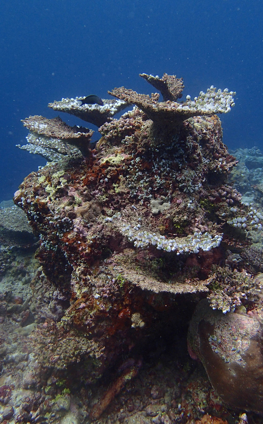 urn tunicates.jpg