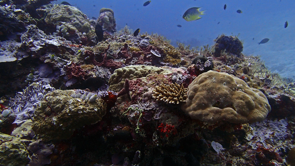 decent coral shot.jpg