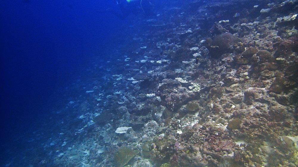 Ari Atoll outbreak.jpg
