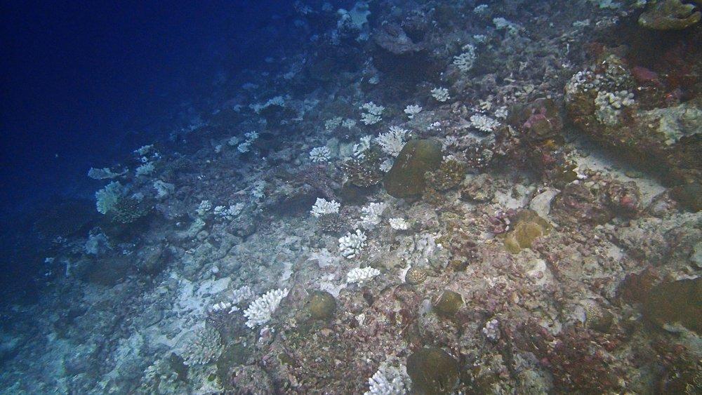 COTS-damaged reefs.jpg