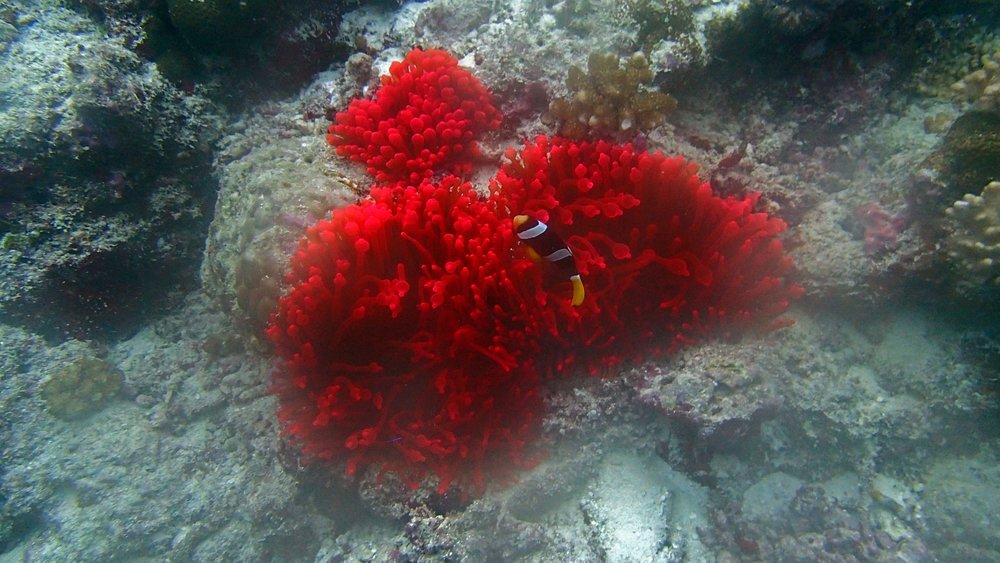 fluorescent anemone.jpg