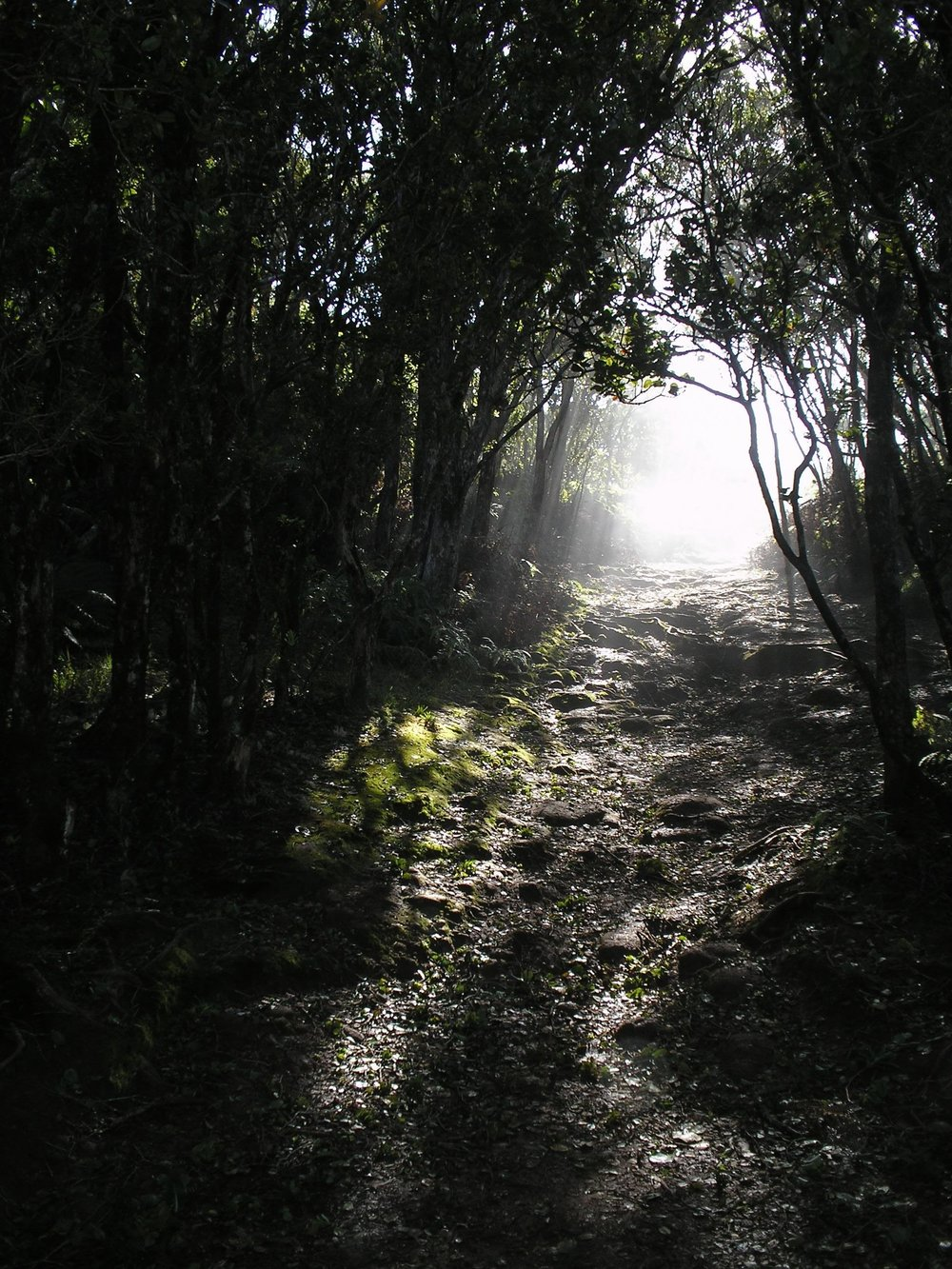 cool forest shot.JPG