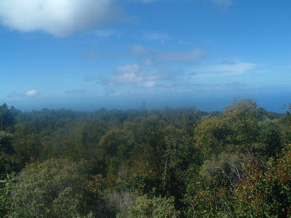 kauai forest.JPG
