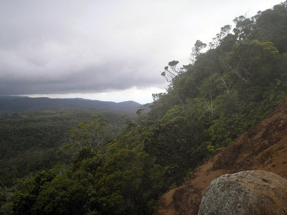 alakai swamp trail.jpg