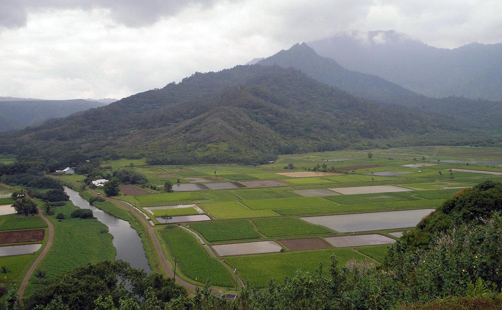 hanalei valley toobin.jpg