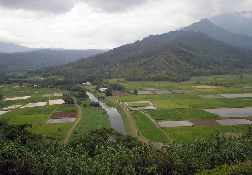 hanalei valley tubin.jpg