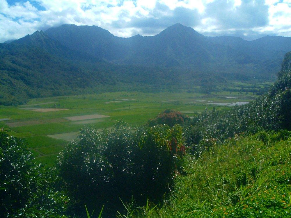 kauai taro fields.JPG