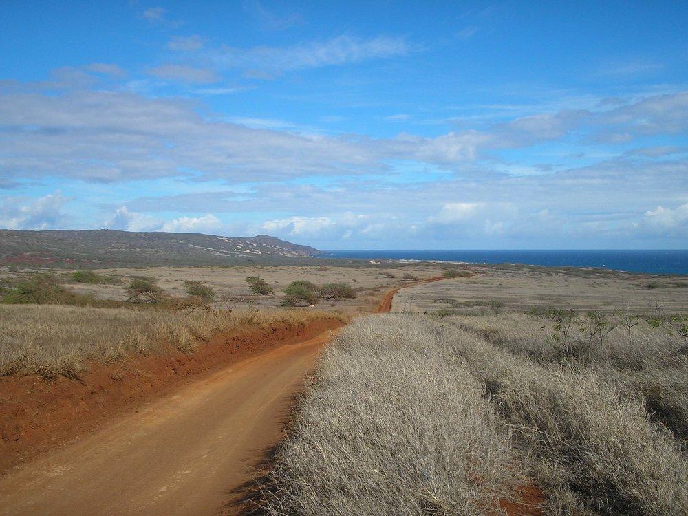 road to moomomi.jpg