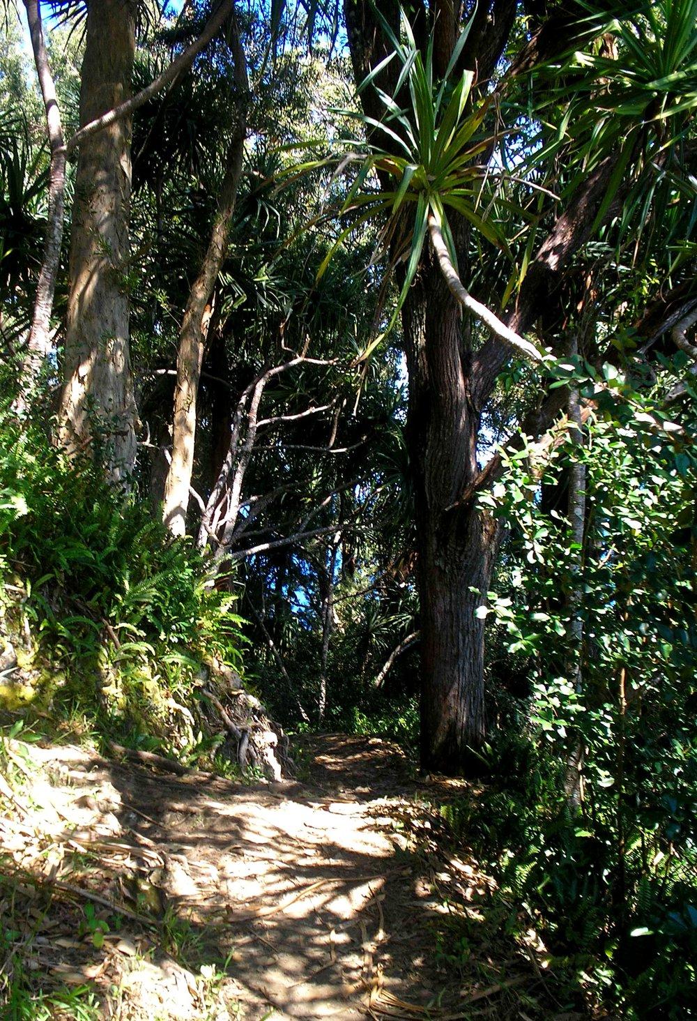 koolau forest reserve.jpg