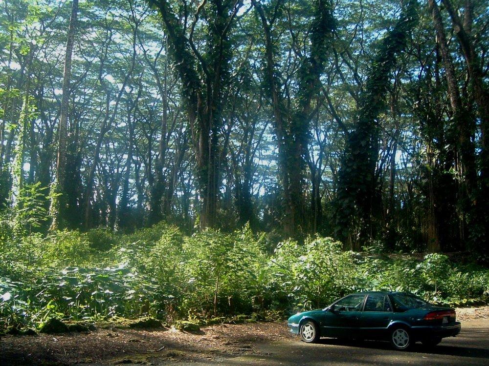 the saturn at lava tree.JPG