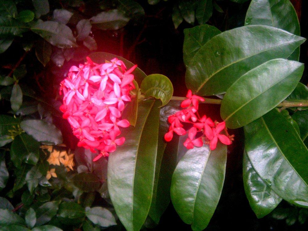 cool red flower.JPG