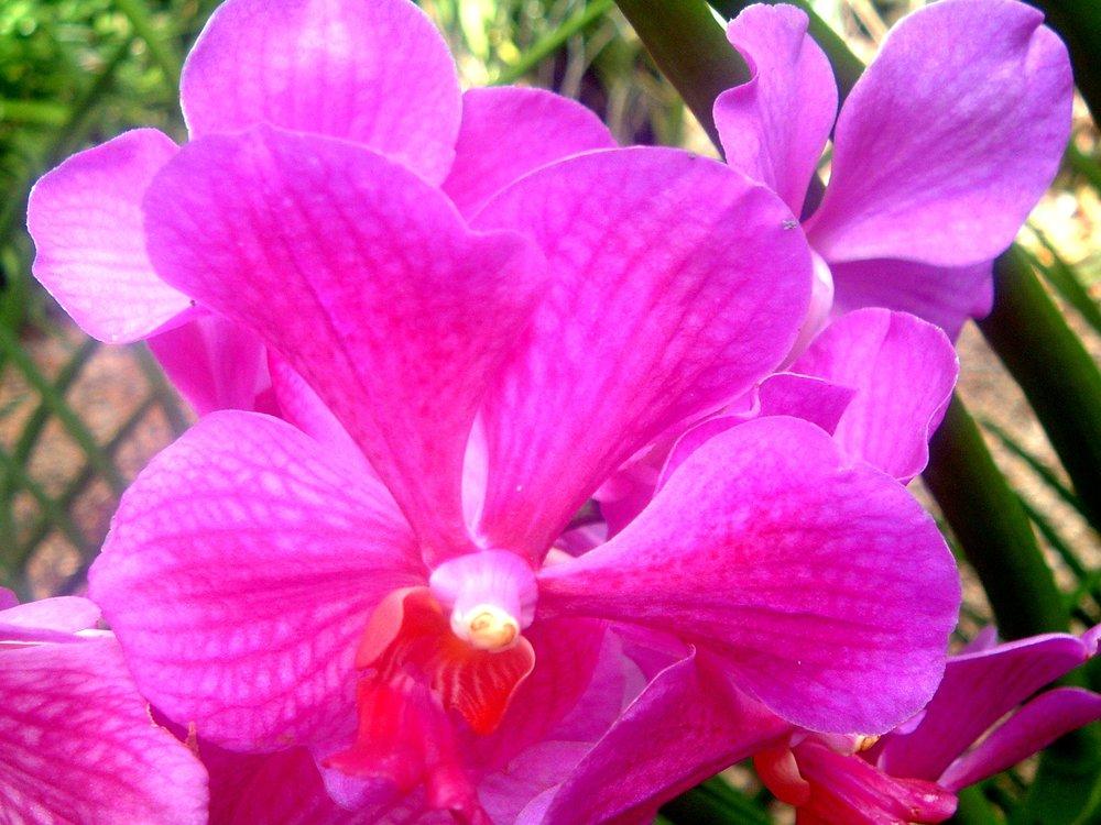 great flower shot.JPG