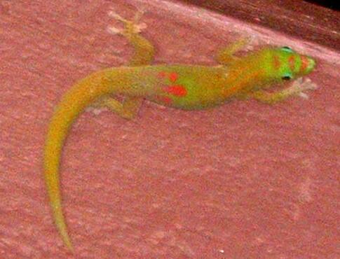 shitty lizard shot.JPG
