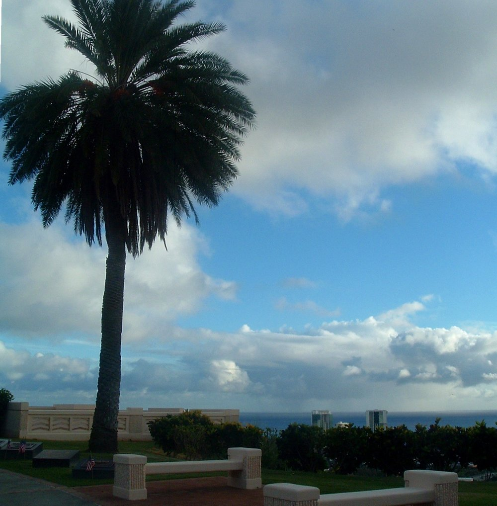 palm tree at national cemetary of the pacific.JPG