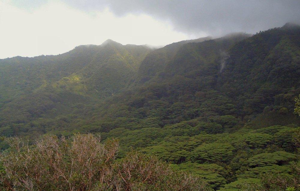 waahila ridge trail.jpg