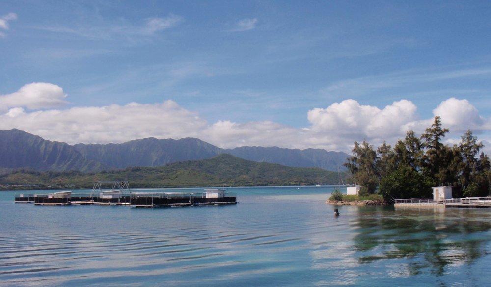 Coconut Island can't complain.jpg