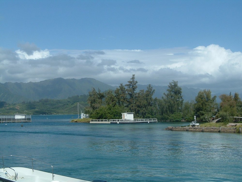coconut island2.jpg