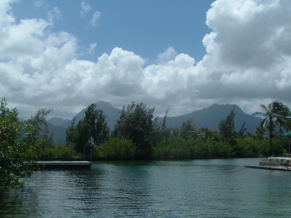 more coconut island.jpg
