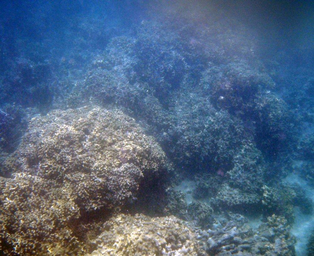 underwater coconut.jpg