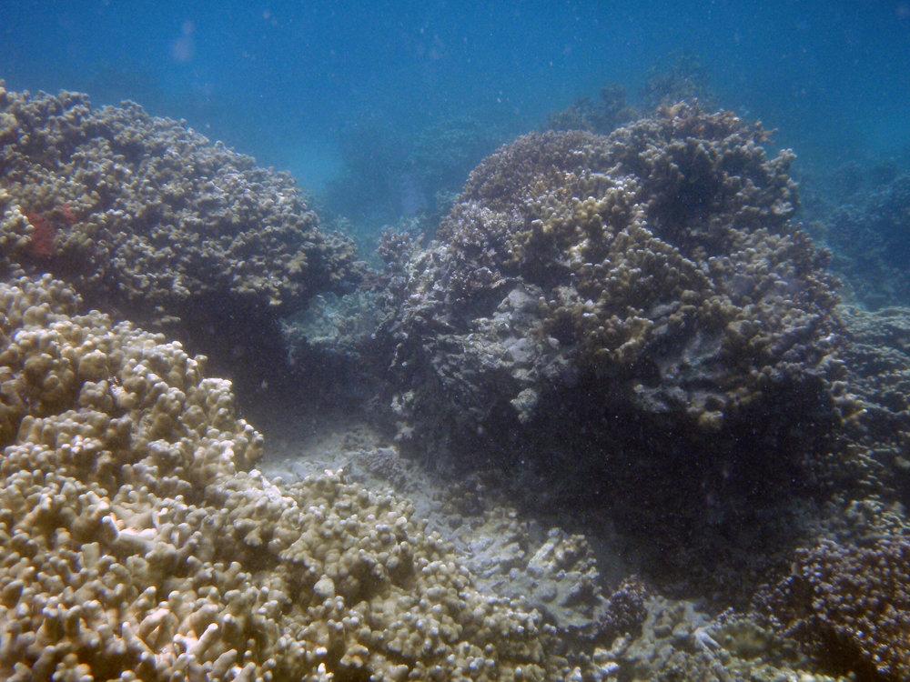 underwater coconut 2.jpg