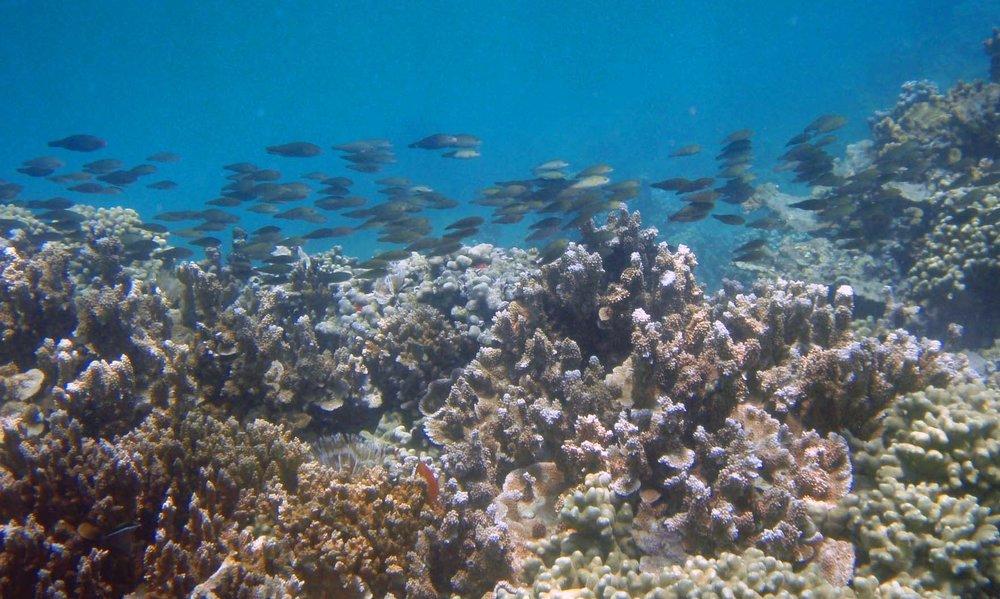 coral and fish (good).jpg