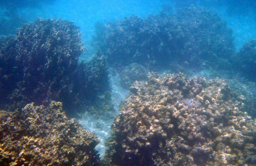 Coconut sea scape.jpg