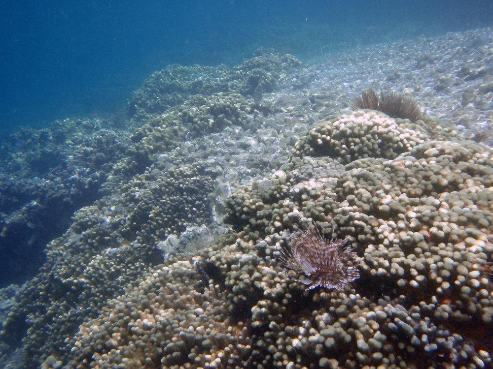 coconut reefs.jpg