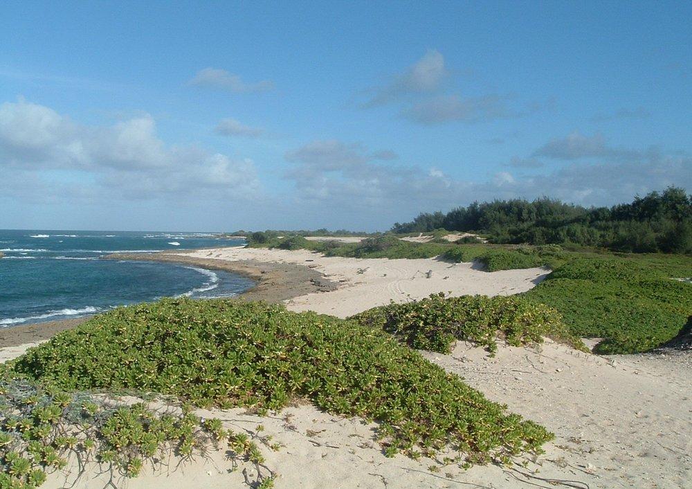 kahuku point and turtle bay.jpg