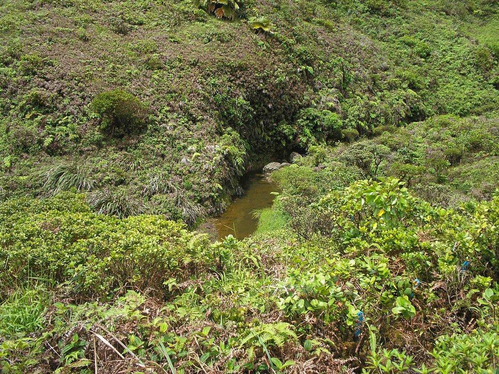 achatinella field site.jpg
