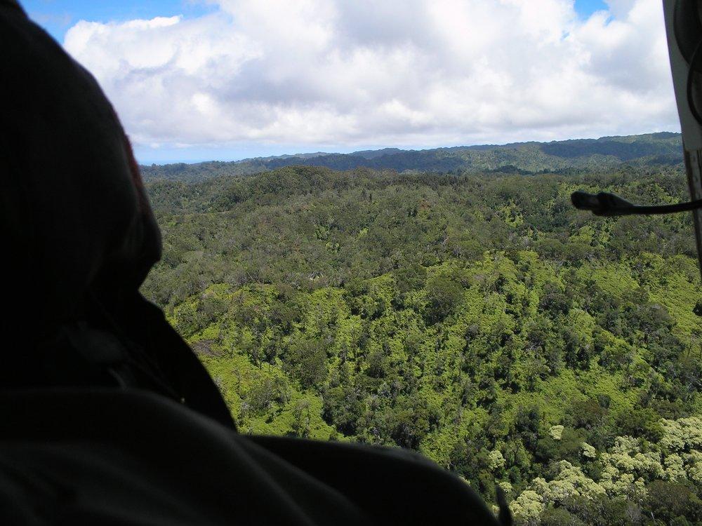 view form chopper.jpg