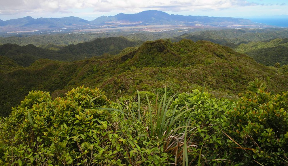 waianaes from opaeula.jpg
