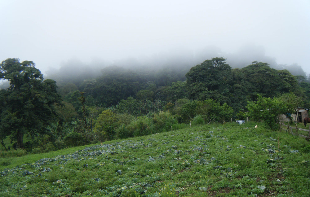 in the cloud forest.jpg