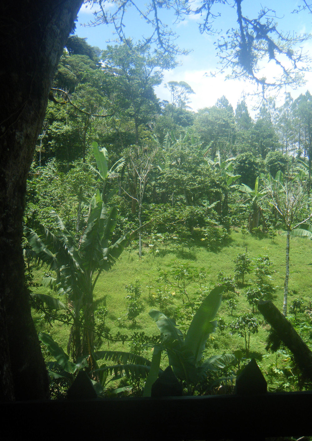 view from the treehouse.jpg