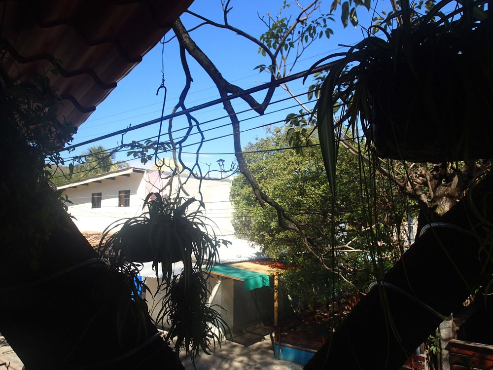 view from Sweet Garden.jpg