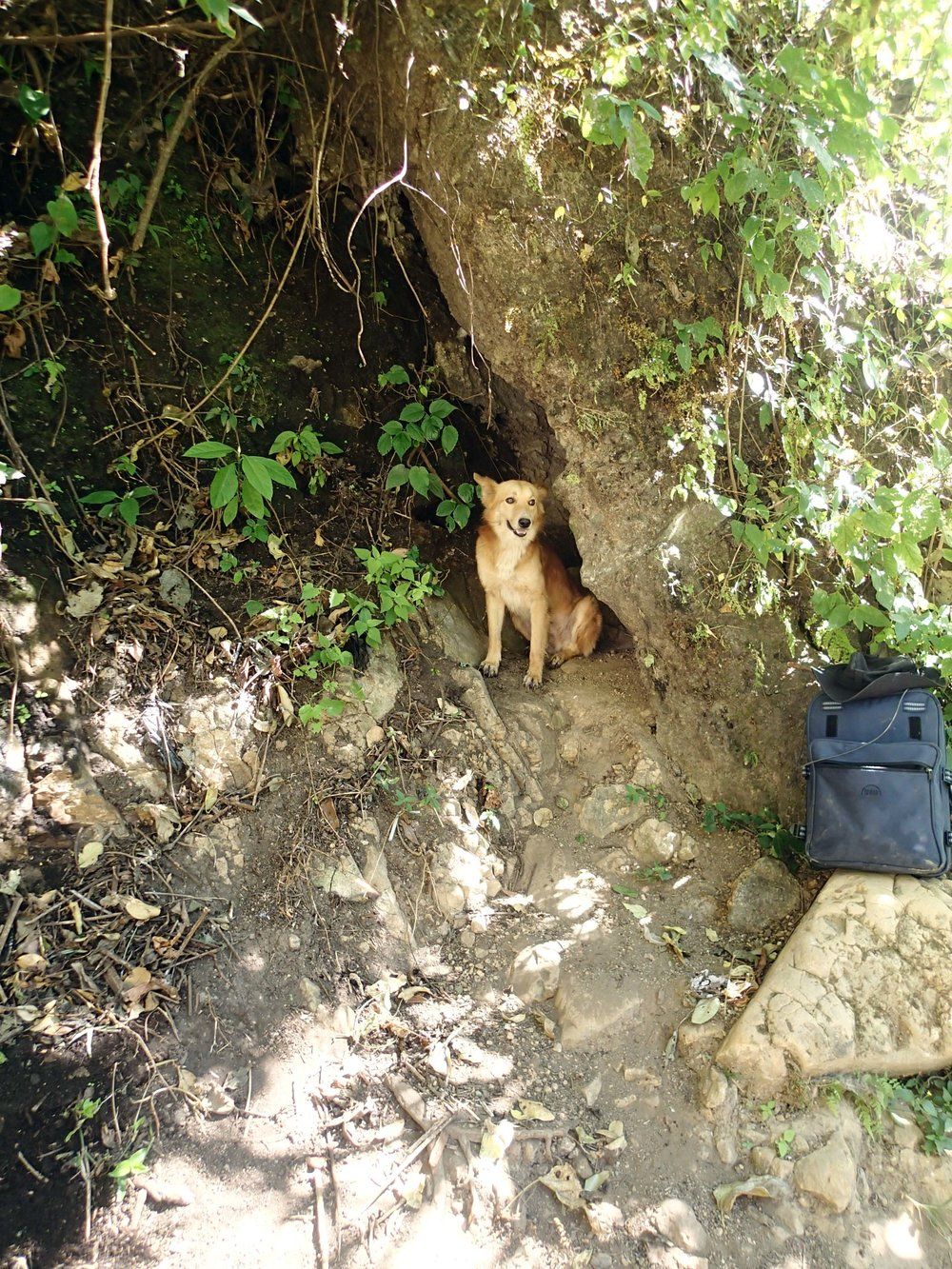 buddy in the cave.jpg