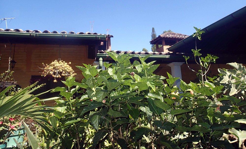 Villa Santo Domingo garden.jpg