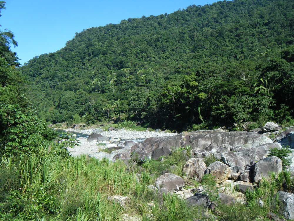 north Honduran jungle.jpg