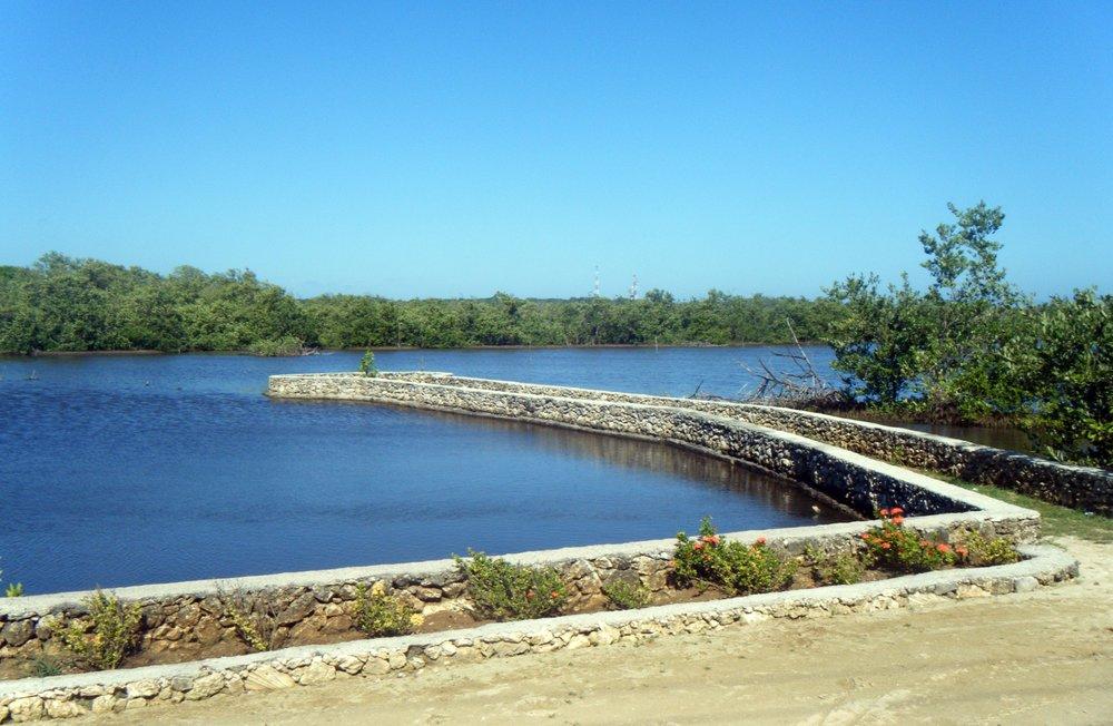 Utila mangroves.jpg