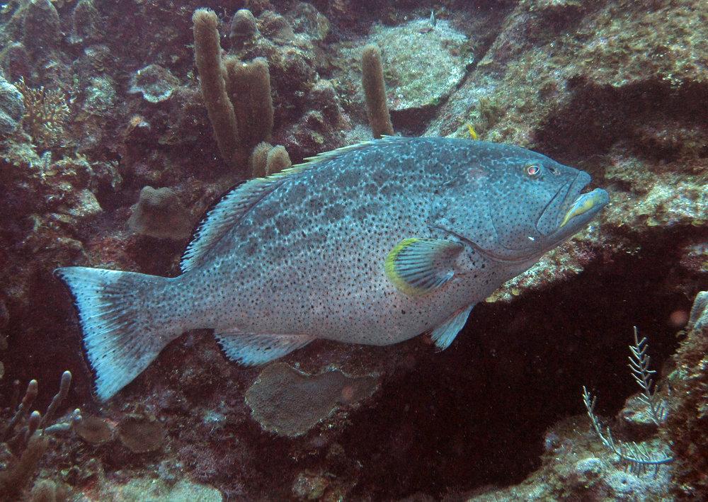 reef fish.jpg