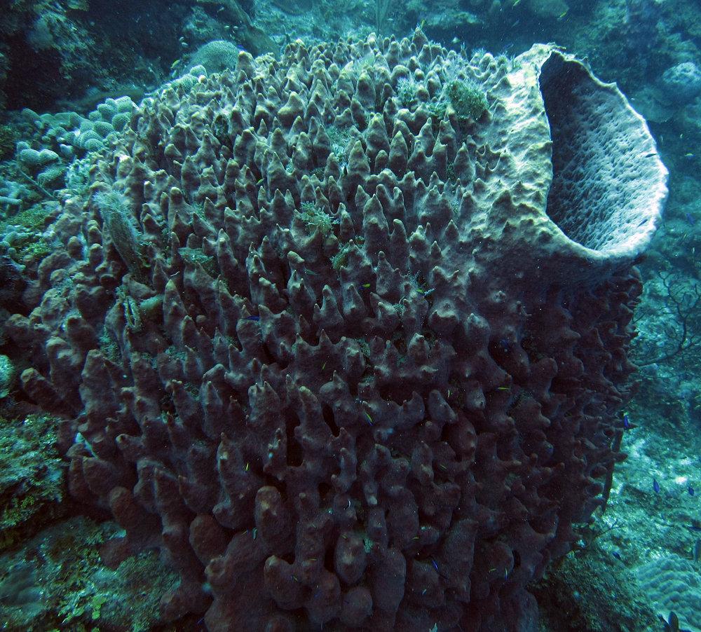 sponge 4.jpg