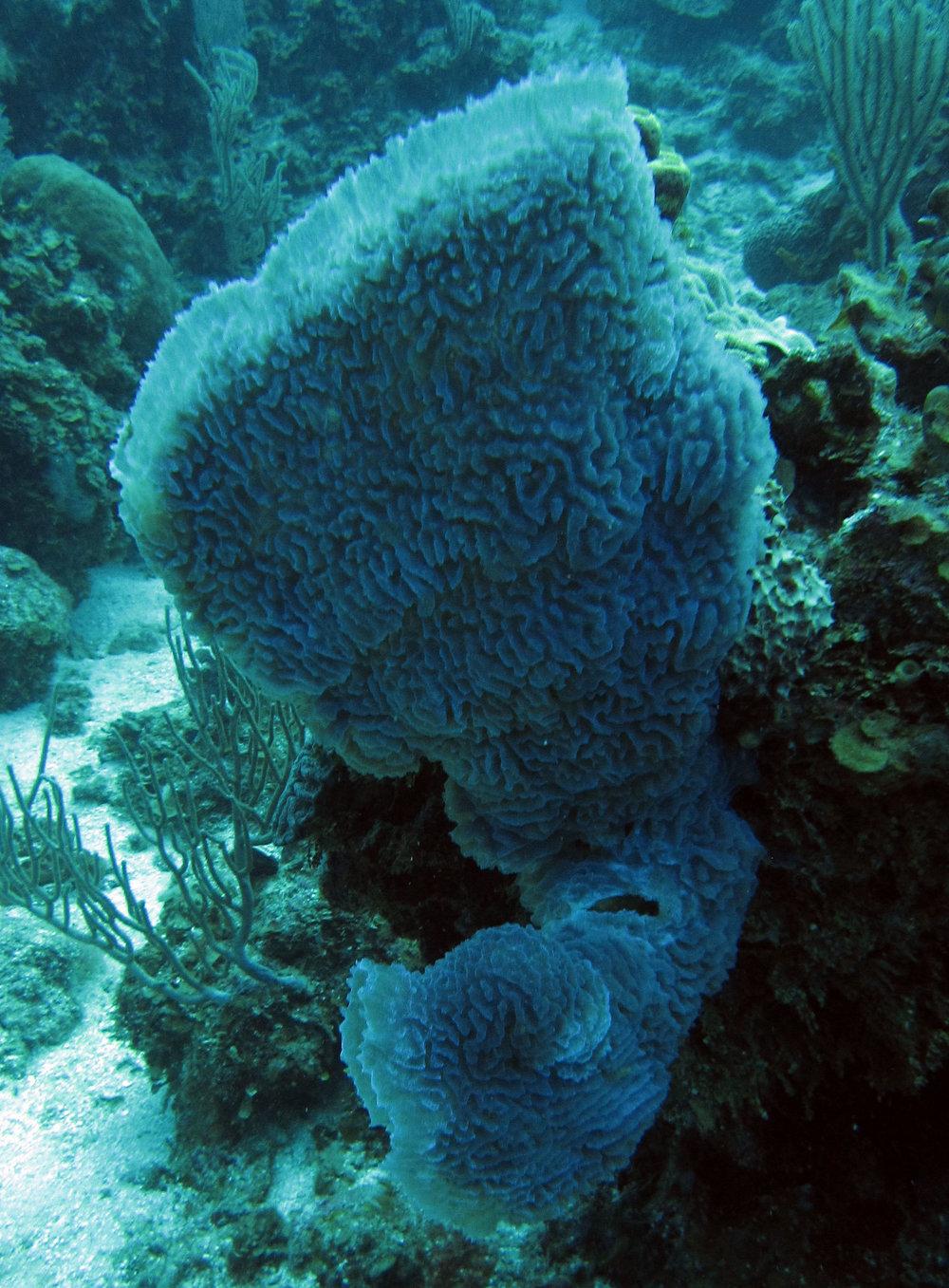 sponge 5.jpg