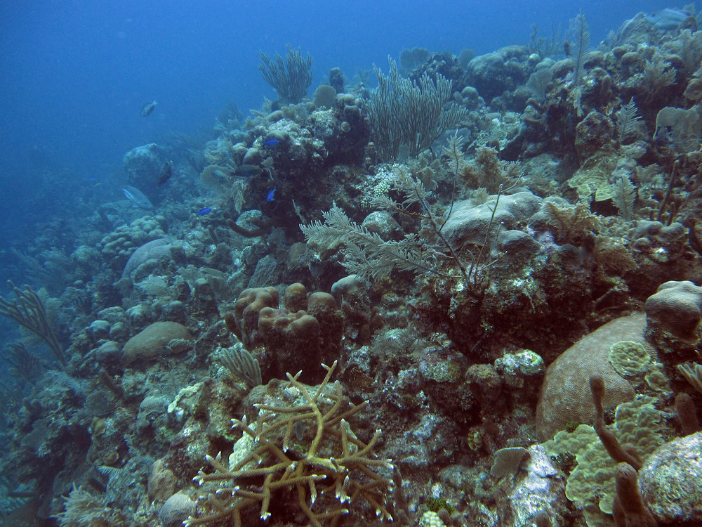 beautiful reef shot.jpg